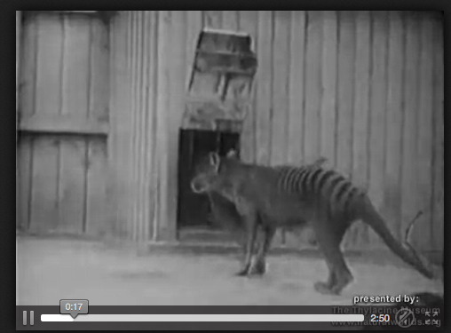 http://upload.wikimedia.org/wikipedia/commons/transcoded/8/80/Thylacine_footage_compilation.ogv/Thylacine_footage_compilation.ogv.360p.webm